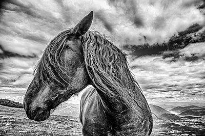 Pferd - p1205m1515952 von Toni Anzenberger