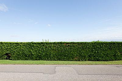 Thujahecke am Straßenrand - p248m952936 von BY