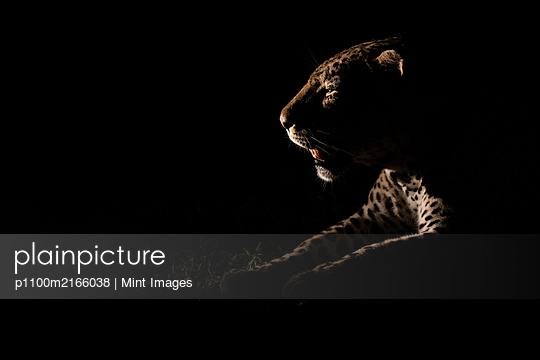 12.02.19 - p1100m2166038 by Mint Images