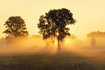 Trees on a meadow with early morning haze at sunrise - p300m1450292 by Brigitte Stehle