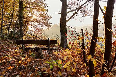 Bank im Herbstwald - p761m1190500 von Adeleida