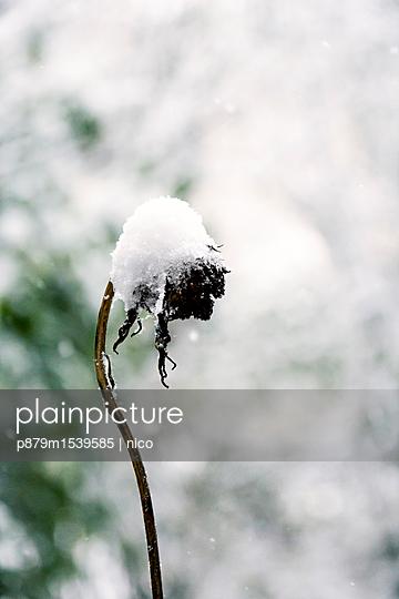 Fresh snow - p879m1539585 by nico