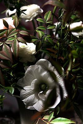 Bouquet blanc et rose - p1371m1423837 by virginie perocheau