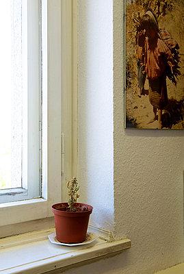 Tod einer Cannabisplanze - p1164m951946 von Uwe Schinkel