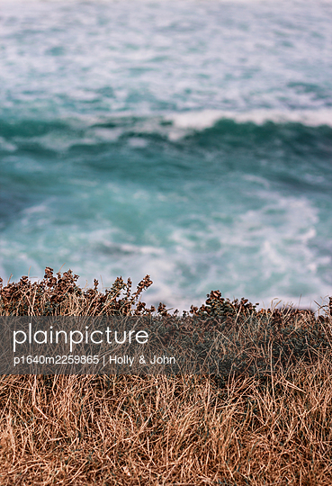 Plants on the cliff line, surf in the background - p1640m2259865 by Holly & John