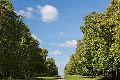 A long or avenue of trees in full leaf in the summer sunshine with blue sky and light cloud. - p1057m1332425 by Stephen Shepherd