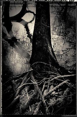 Baum im Nebel - p1088m1207332 von Martin Benner