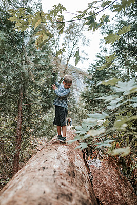 Brothers playing on log amidst forest at Yosemite National Park - p1166m1526864 by Cavan Images