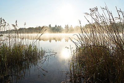 Reeds on the lakeshore - p1312m2275833 by Axel Killian