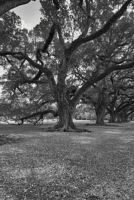 USA, Trees in a park - p1686m2288559 by Marius Gebhardt