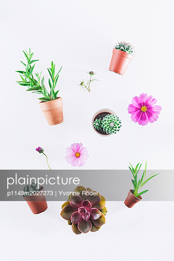 Small cacti and succulents - p1149m2027273 by Yvonne Röder