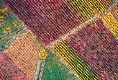 The countryside near Castelvetro, Modena Province, Emilia Romagna, Italy - p651m2033107 by Stefano Termanini