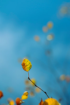 Autumn foliage - p1228m2220142 by Benjamin Harte