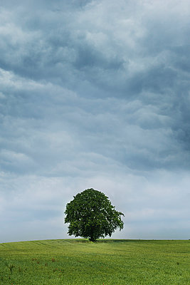 Tree - p954m1048498 by Heidi Mayer