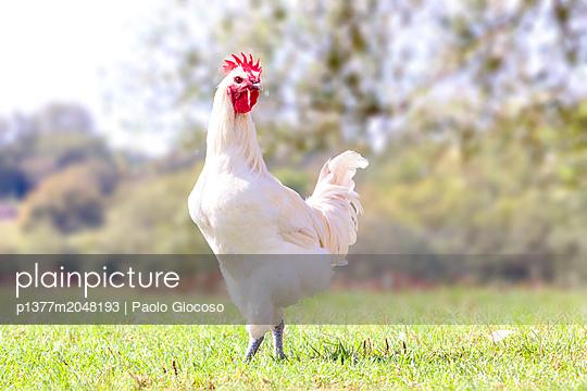 p1377m2048193 von Paolo Giocoso