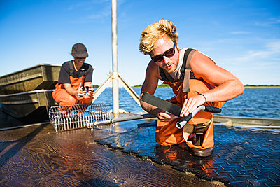 Young man working on the water in aquaculture oyster farm maintenance - p1166m2268898 by Cavan Images