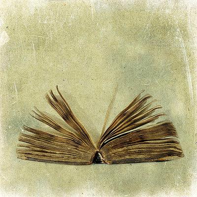 Literature - p813m701026 by B.Jaubert