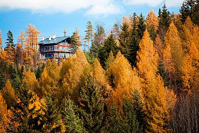 Haus am Berg im Wald - p8420079 von Renée Del Missier