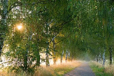 Allee in der Morgensonne - p739m1162859 von Baertels