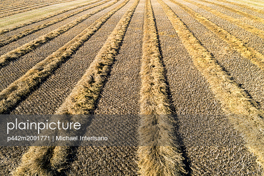 A graphic view of lines of cut canola in a field, West of Beiseker; Alberta, Canada - p442m2091771 by Michael Interisano