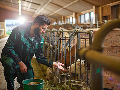 Farmer feeding calf in stable on a farm - p300m1567820 by Christian Vorhofer