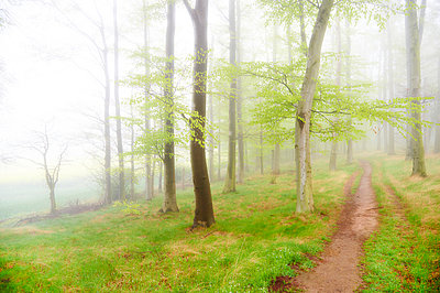Forest - p851m931115 by Lohfink