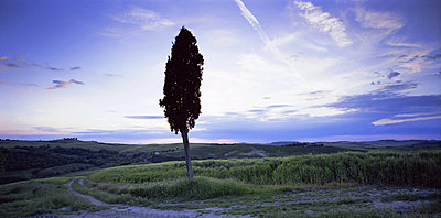 Tree in silhouette near San Quirico d'Orcia, Tuscany, Italy, Europe - p8710417 by Lee Frost