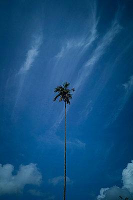 Lone palm tree, Ella, Sri Lanka, Asia - p934m1558818 by Sebastien Loffler