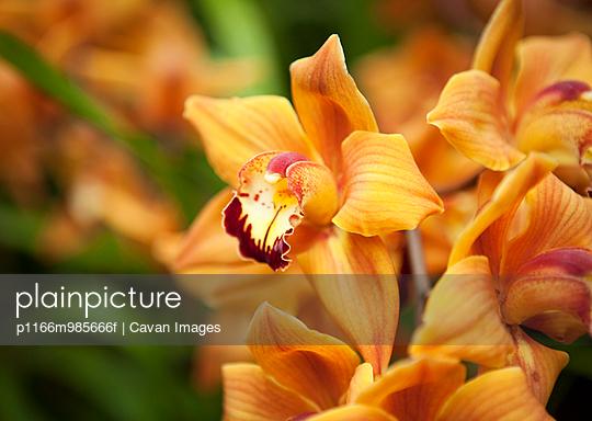 p1166m985666f von Cavan Images