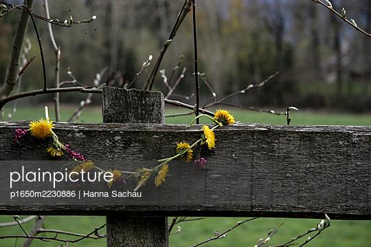 p1650m2230886 by Hanna Sachau