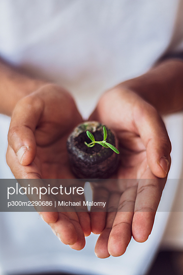 Cupped hands holding sage seedling - p300m2290686 by Michael Malorny