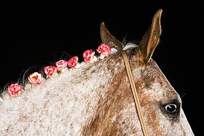 Pferd mit eingeflochtenen Rosen - p5730230 von Birgid Allig