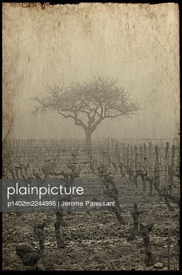 France, Old photo, Vineyard - p1402m2244995 by Jerome Paressant