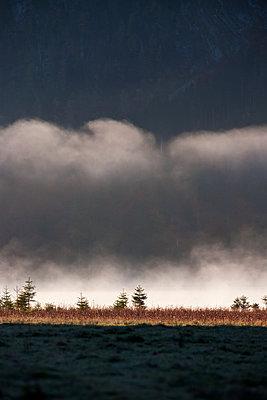 Waft of mist in the sunlight - p533m1556543 by Böhm Monika