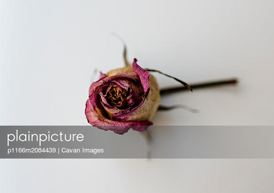 p1166m2084439 von Cavan Images