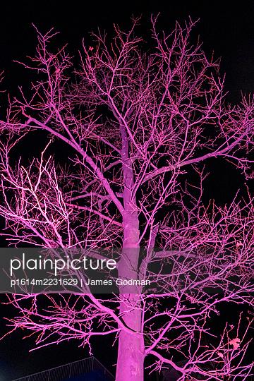 Tree at night, pink illuminated - p1614m2231629 by James Godman
