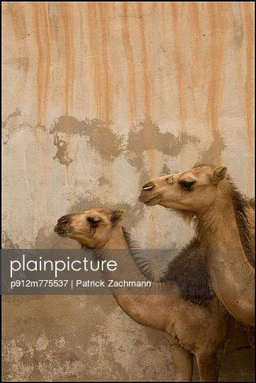 p912m775537 von Patrick Zachmann