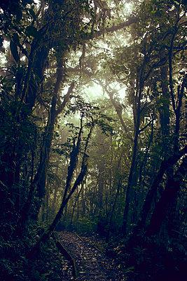 Monteverde Cloud Forest, Costa Rica - p1439m1508039 von Saskia Uppenkamp