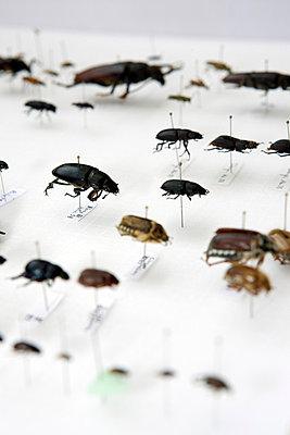Bugs - p3270215 by René Reichelt