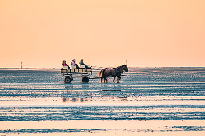 Horsecart on the Wadden Sea at sunset, Duhnen, Cuxhaven, Lower Saxony, Germany. - p651m2007249 by Marco Bottigelli