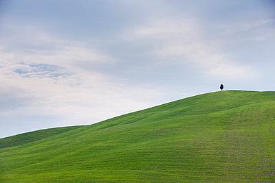 Einsame Zypresse - p7980134 von Florian Loebermann