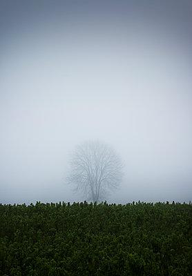 Der unscheinbare Baum im Feld - p1574m2151325 von manuela deigert