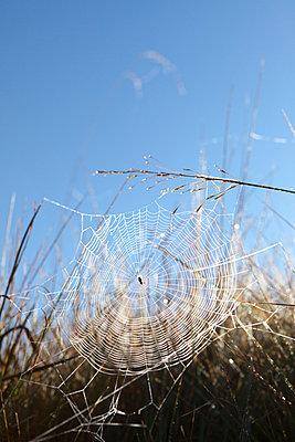 Spinnennetz - p795m1031519 von Janklein