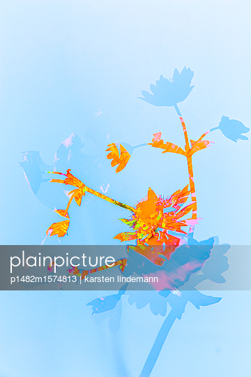 Pflanzen - p1482m1574813 von karsten lindemann