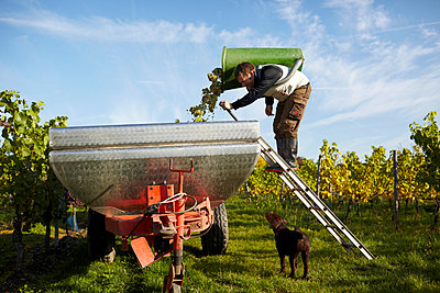 Grape harvest - p1145m951119 by Kerstin Lakeberg