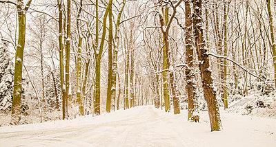 Verschneiter Wald - p999m949627 von Monika Kluza