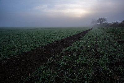Feld im Morgenlicht II - p1057m856404 von Stephen Shepherd