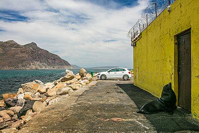 Seelöwe vor der Tür - p1082m2071330 von Daniel Allan