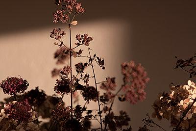 Getrocknete Blüten in Violetttönen - p1650m2231834 von Hanna Sachau