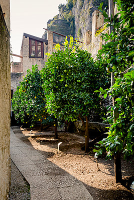 Italy, Lombardy, Brecia, Limone sul Garda, Lemon trees at Limonaia  del Castel - p300m973512 by Larissa Veronesi